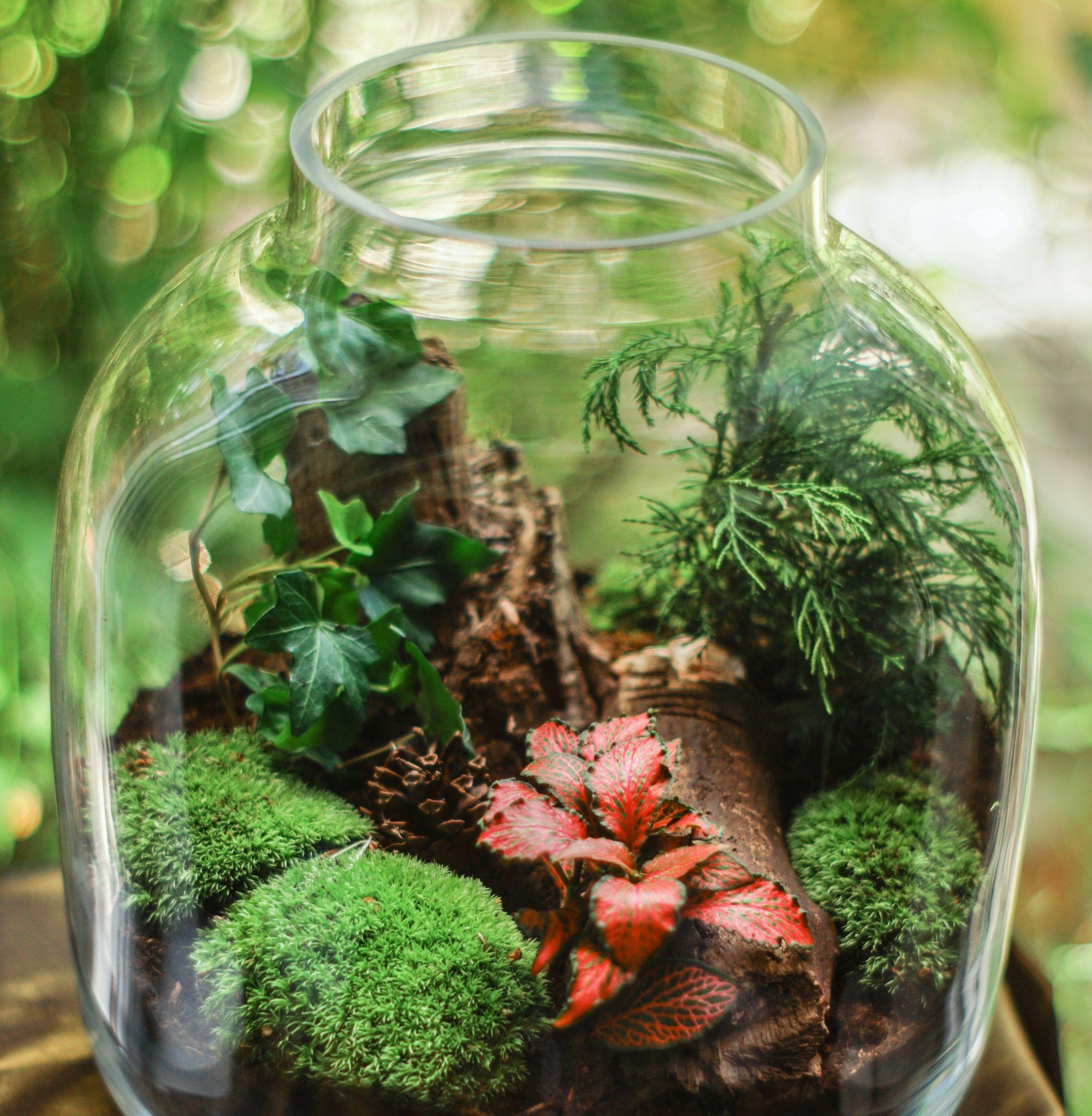 A green terrarium