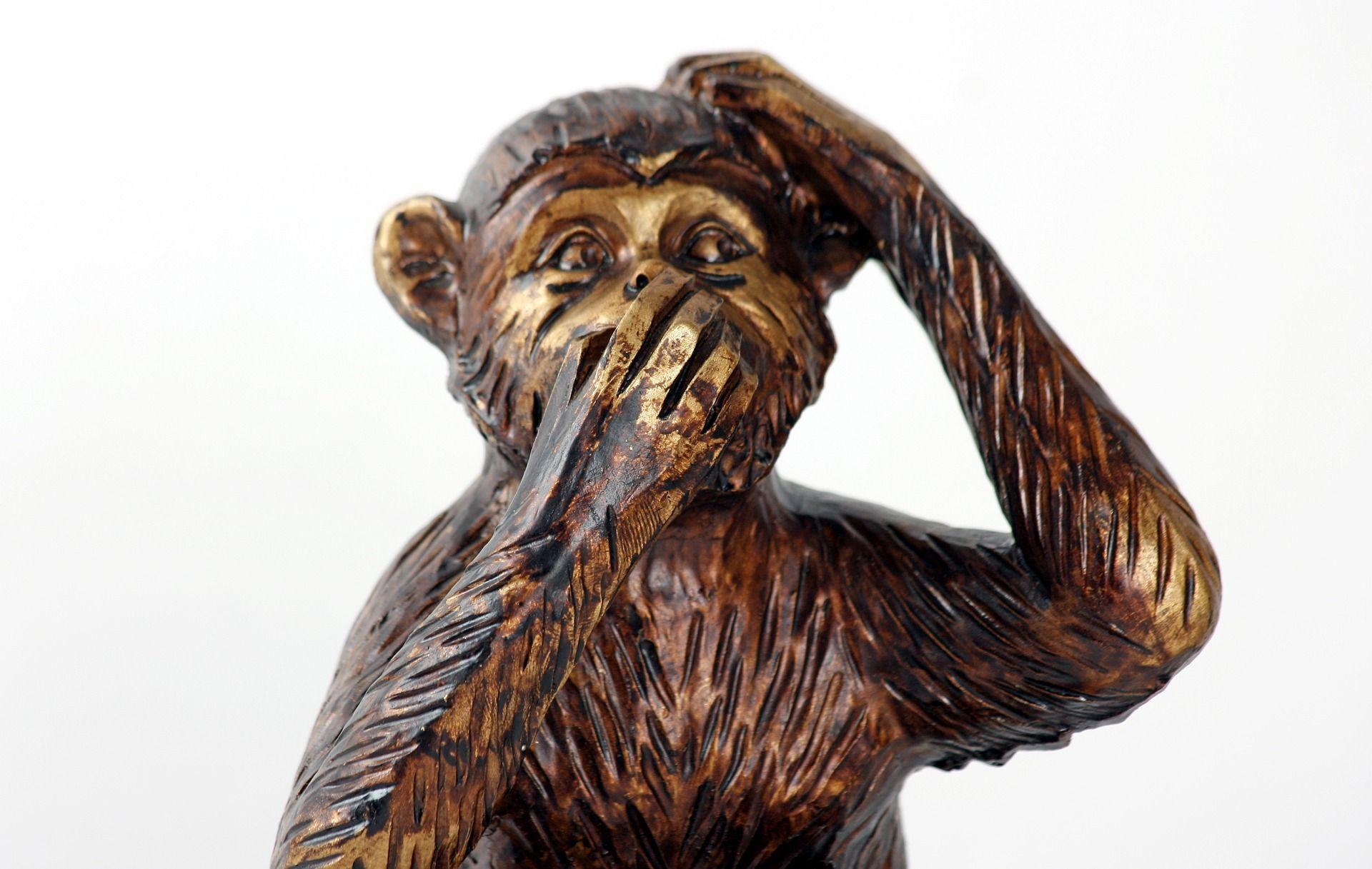 Chinese monkey for ear-eye training