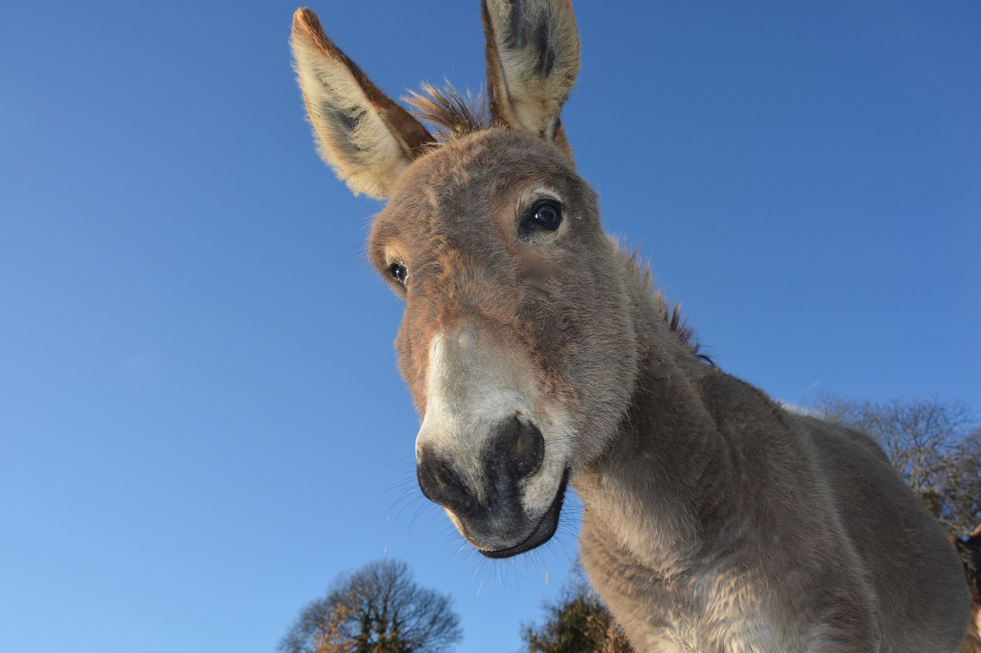 Donkey looking for study motivation