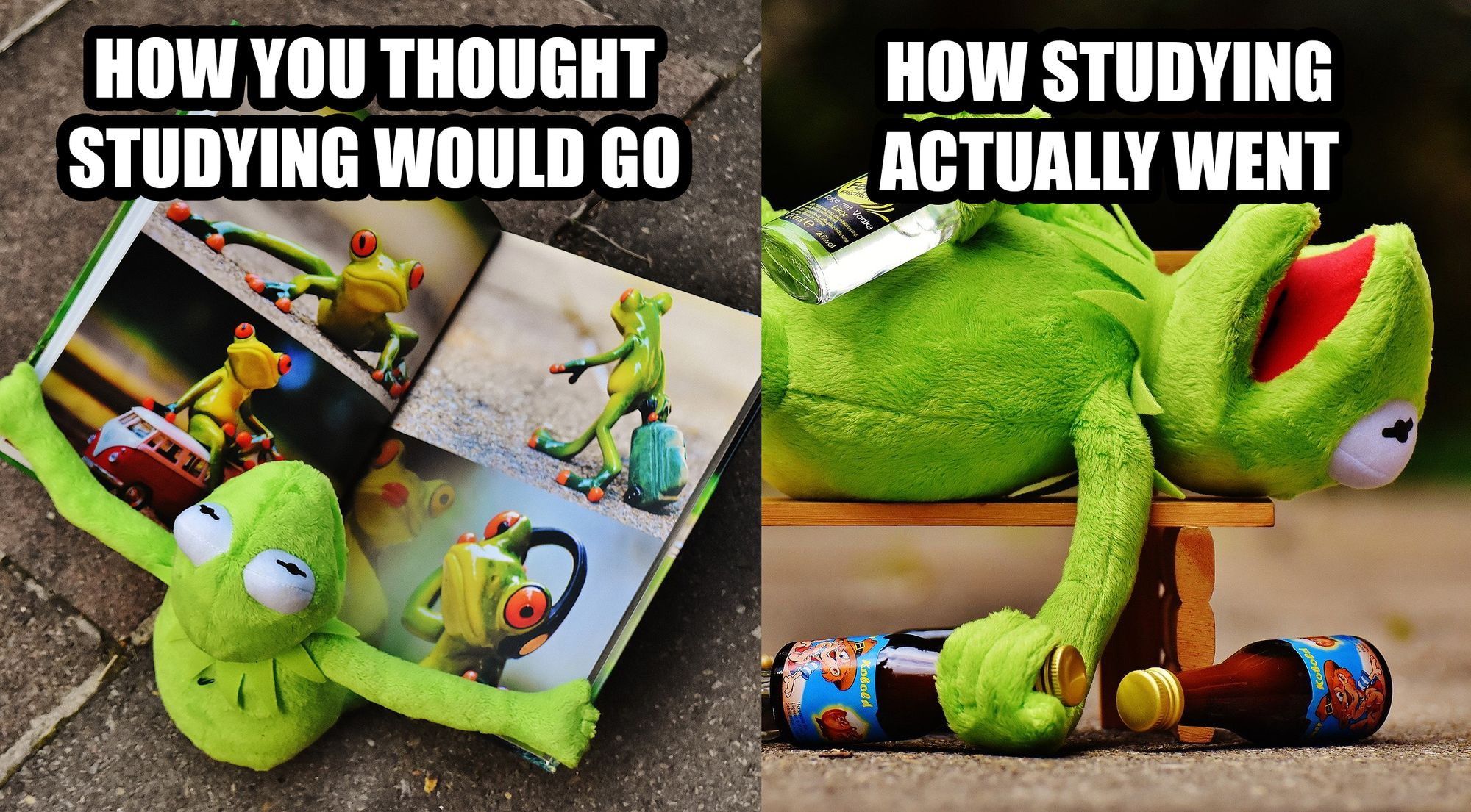 Kermit without and with study motivation