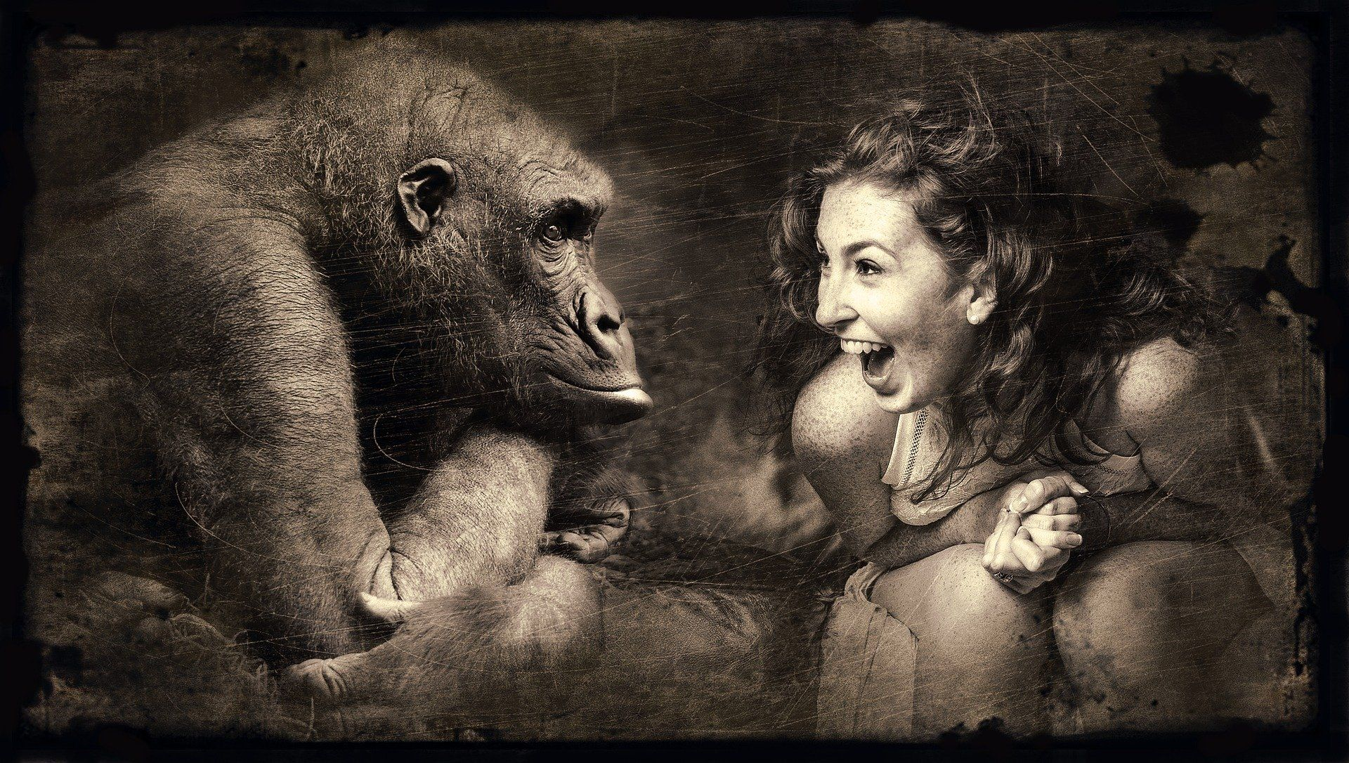 Girl talking to a gorilla to learn a language