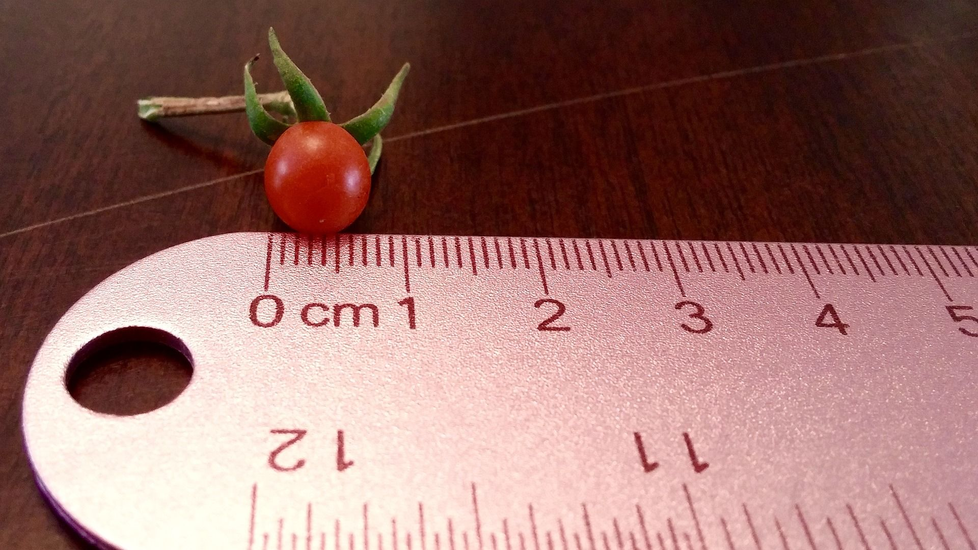 Tomato and a ruler