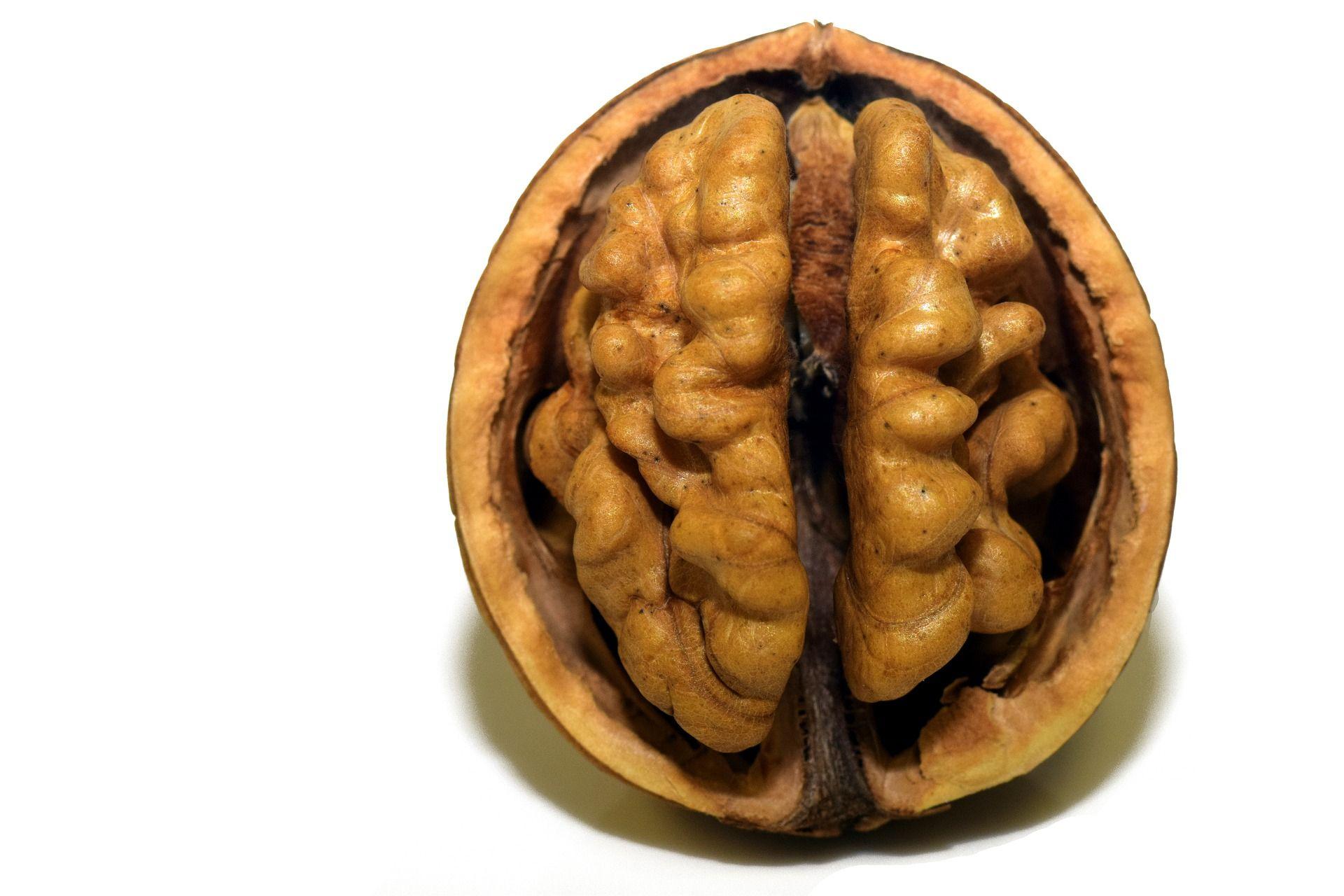 A walnut for optimal brain health