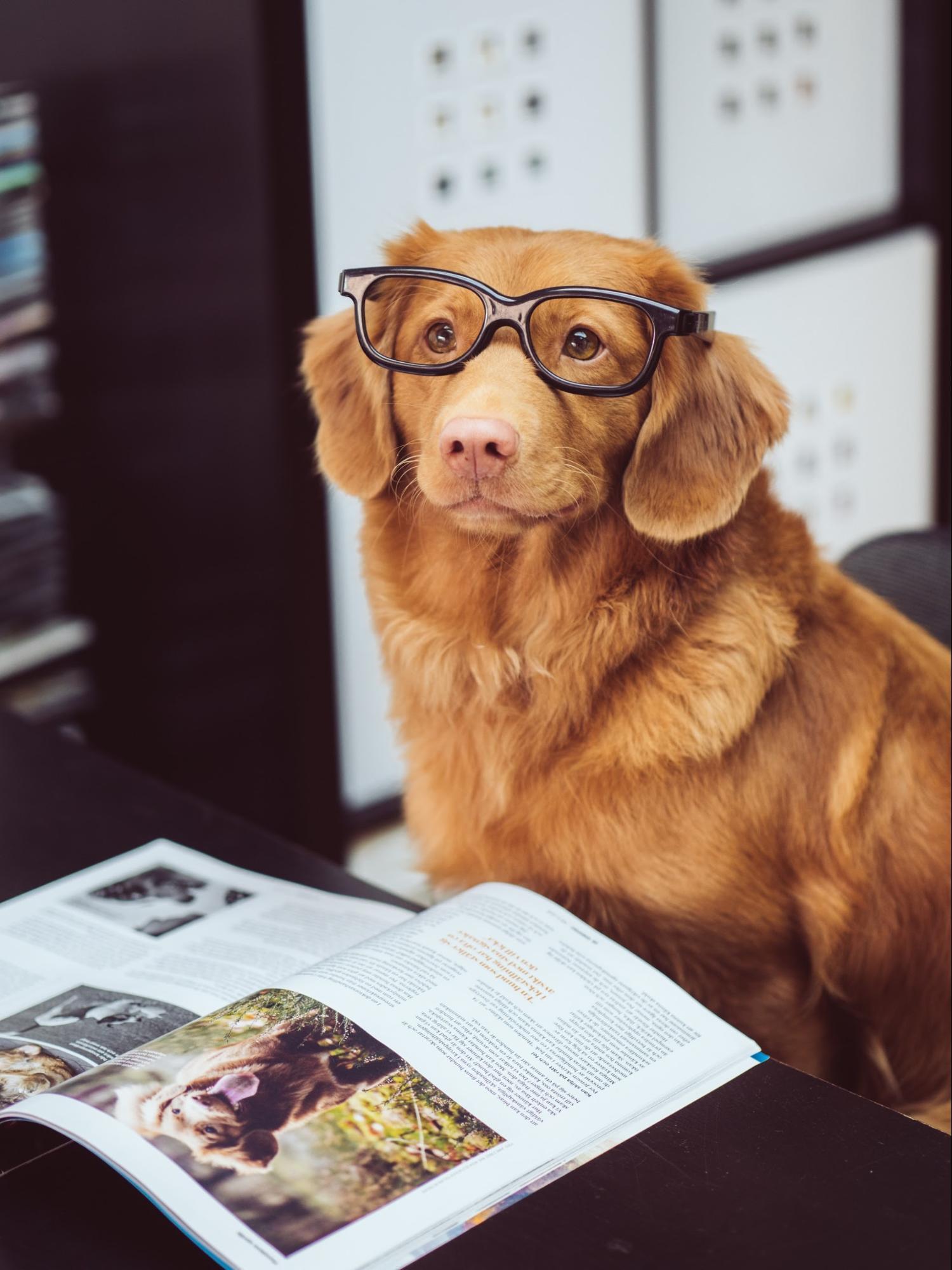 Dog with glasses and reading a magazine