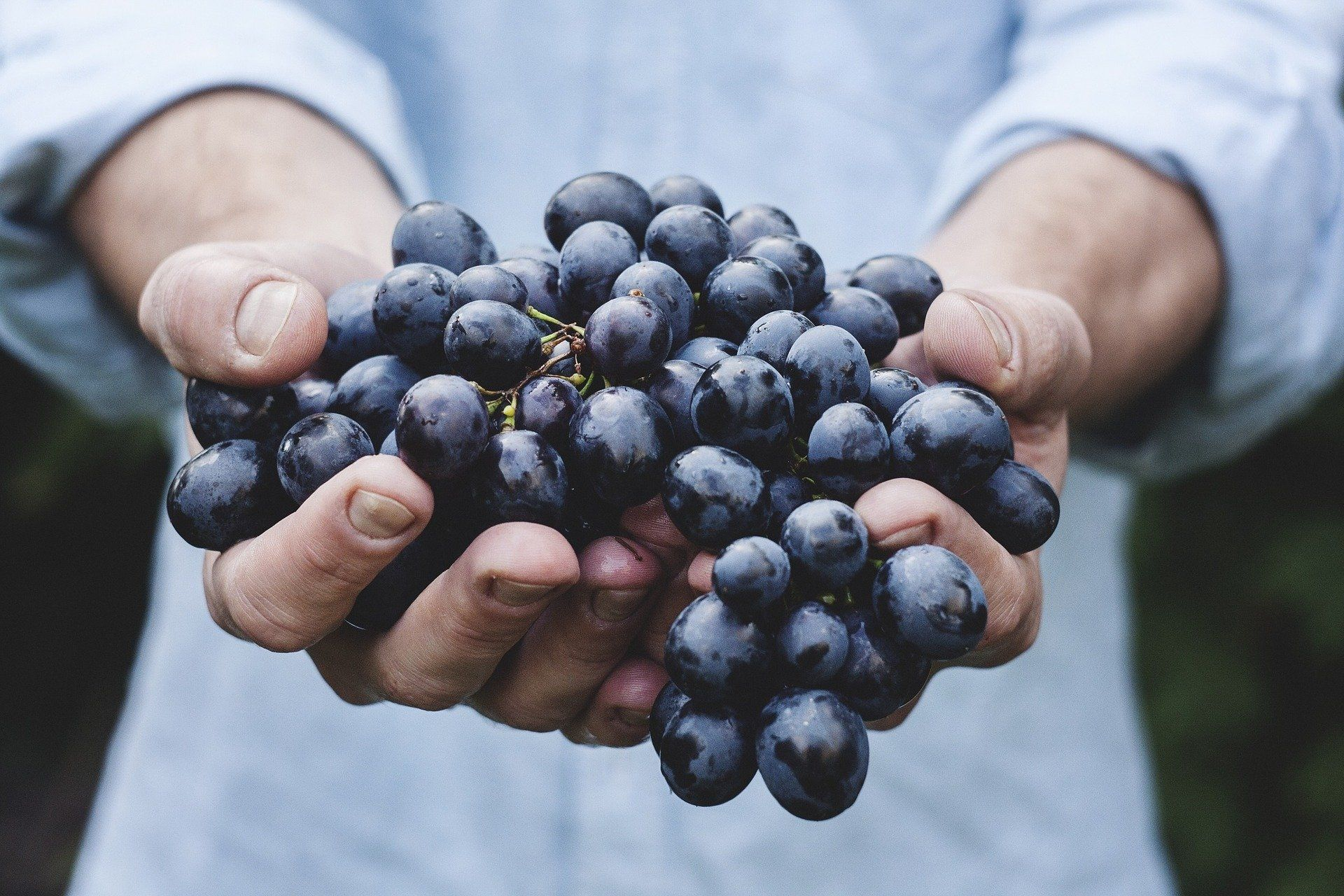 Man holding a bunch of grapes