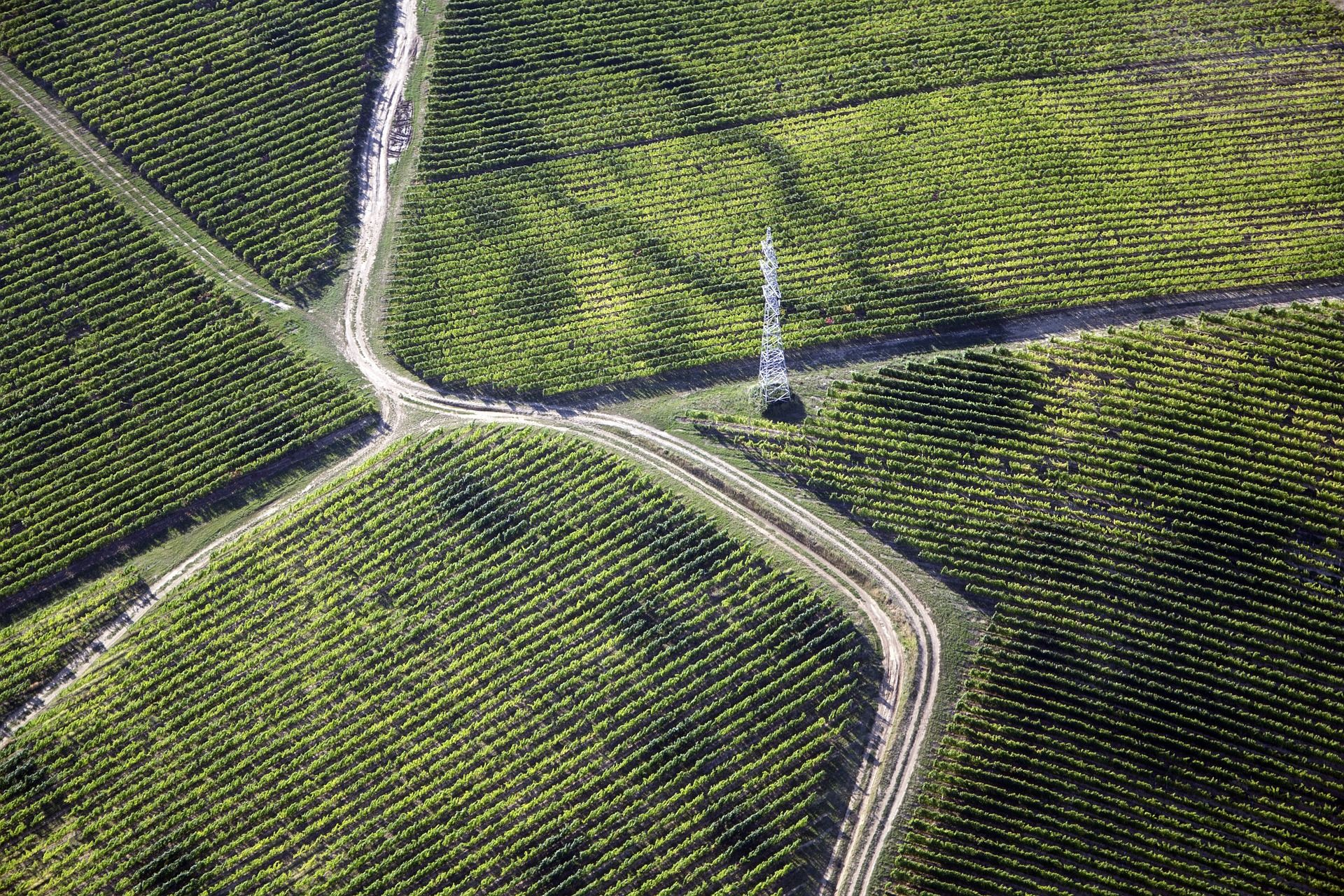 Wine region with vineyards, WSET level 3 study guide