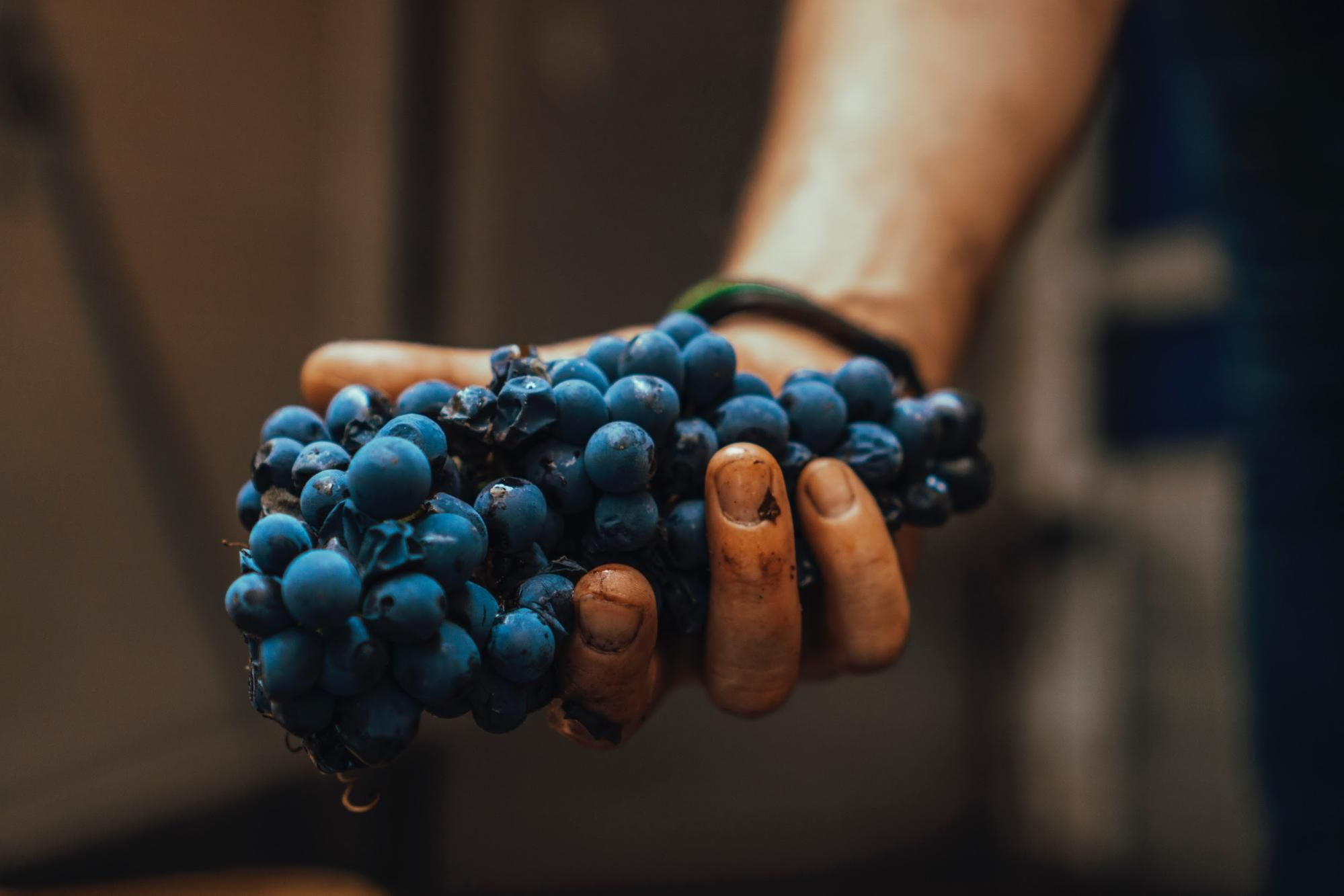 Blue grapes; Wine sommelier