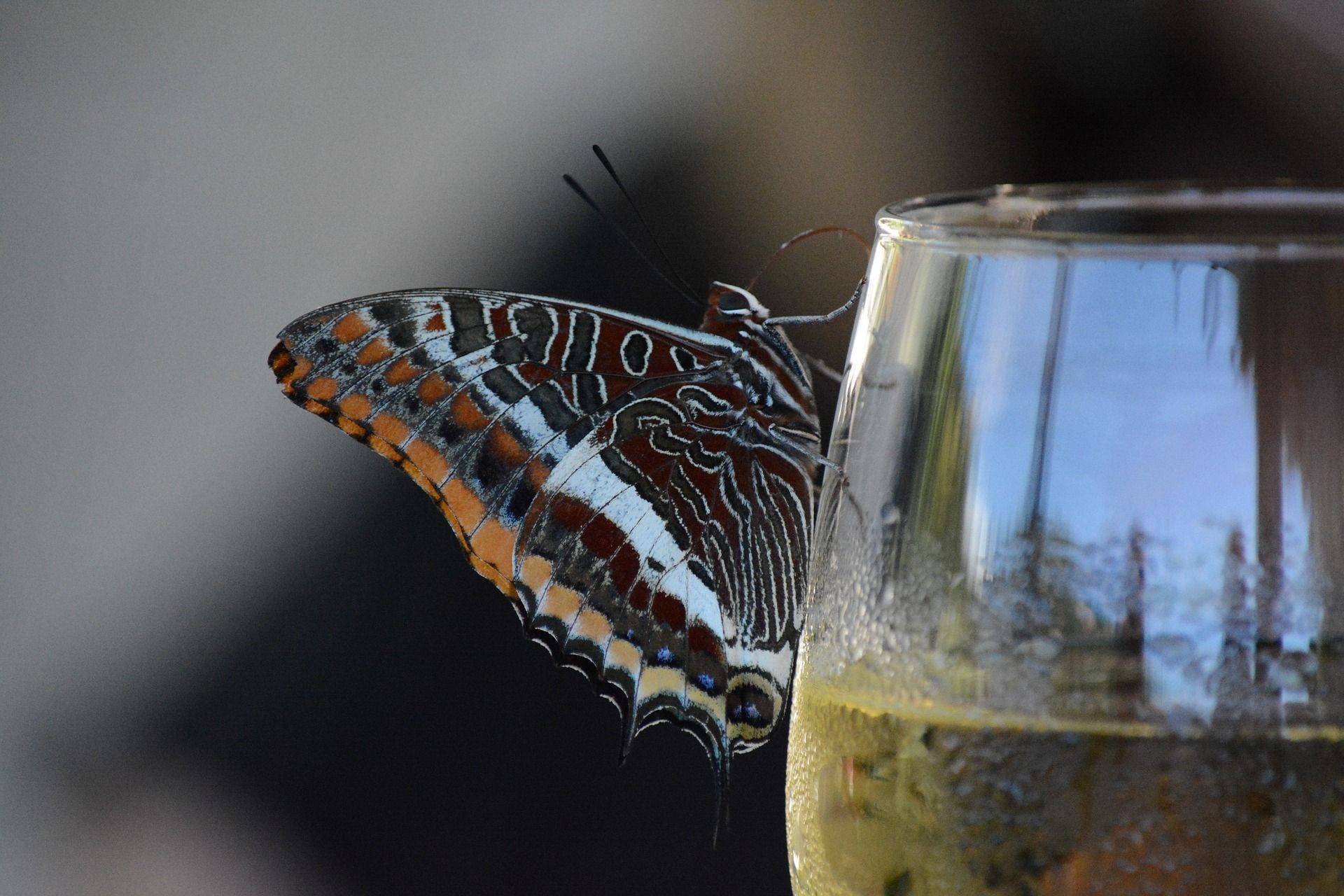 Butterfly on wine glass; WSET Level 1 exam