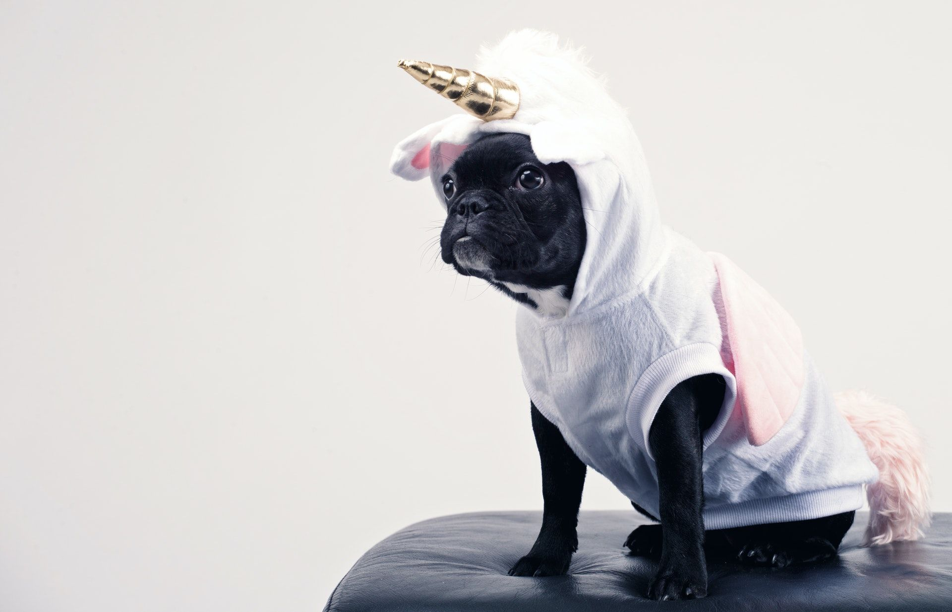 Dog in a unicorn costume; NCLEX-RN review course