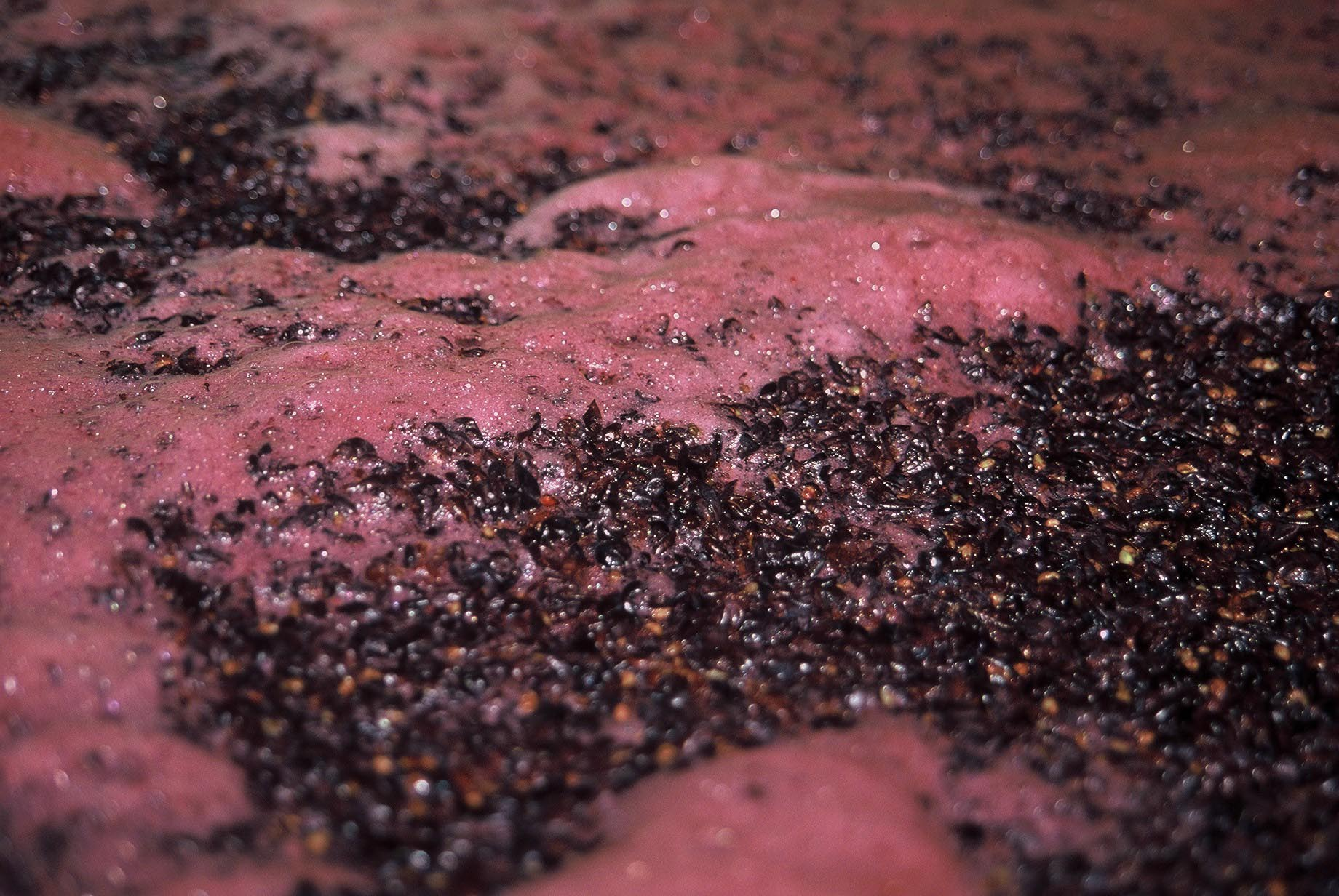 Macerate your grapes; homemade wine