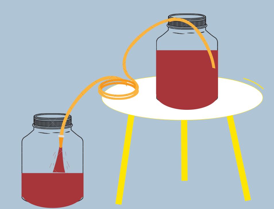 Racking the wine for homemade wine making